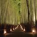 地元社員がおすすめする!冬の京都をはんなりほっこり散歩