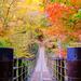 秋の三連休どこで何する?温泉・グルメ・紅葉などおすすめ観光スポット【まとめ】