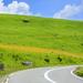 夏休みにおすすめ!夏のビーナスラインを走る絶景高原ドライブ