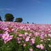 春夏秋冬いつ行っても何かの見頃♪東京の癒しスポット昭和記念公園の魅力大公開!