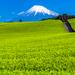 静岡県旅行完全ガイド!おすすめ観光スポット・グルメ・お土産をチェック