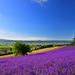 「都道府県魅力度ランキング2020」から都道府県の観光スポットをまとめてみた!