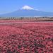 今回の旅行は富士山が主役!富士山絶景と富士山が見えるおすすめ宿をチェック