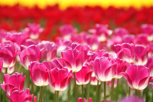 春のカラフル花さんぽ特集