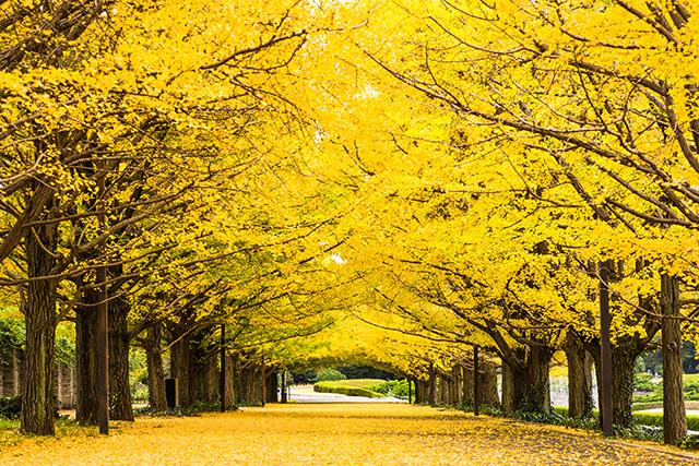 秋の国内おすすめ特集