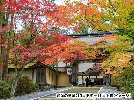 日本三美人の湯・龍神温泉に泊まる 紅葉名所 高野龍神スカイライン・世界遺産高野山と熊野三山詣で 2日間