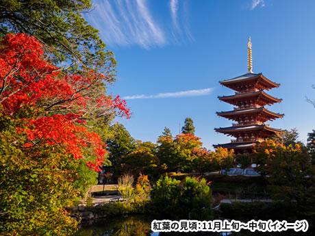 天橋立・舞鶴 色鮮やかに染まる秋の旅 「成相寺」の真っ赤な紅葉と無数のモミジが織りなす「金剛院」 日帰り