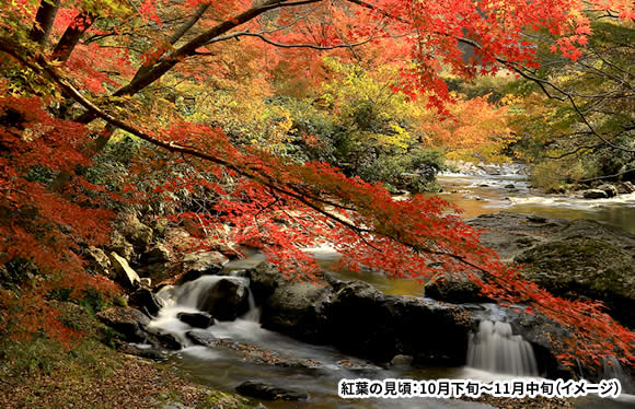 秋色に染まる渓谷美 紅葉の帝釈峡・八重滝と島根の2大名園 2日間