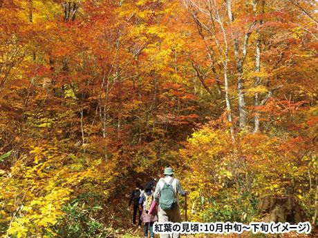 信州秘境ハイキング!黄金色に輝く「鬼無里」と癒やしの「白馬・岩岳ねずこの森」へ 3日間