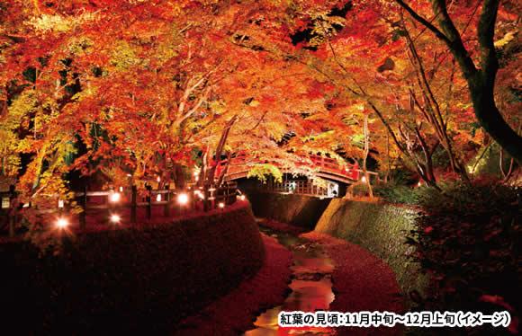 北野天満宮もみじ苑ライトアップと京都紅葉ハイライト 2日間