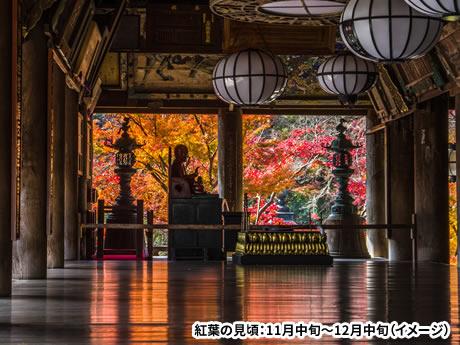 「令和」ゆかりの万葉が薫る飛鳥路と紅葉の室生寺・長谷寺・赤目四十八滝 2日間