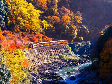 もみじ織りなす紅葉のトンネル 嵯峨野トロッコ列車と保津川下り 日帰り