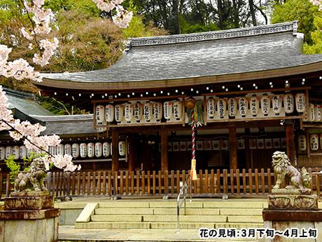 春の特別公開 椿咲く非公開寺院と桜小道の美しい「哲学の道」散策 日帰り