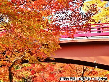 秋彩に染まる信州・越後 絶景紀行 3日間