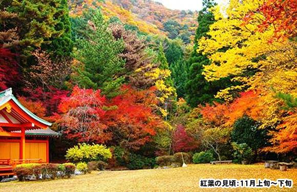 日本三大秘境「椎葉村」と平家伝説の里「五家荘」高千穂神楽 3日間