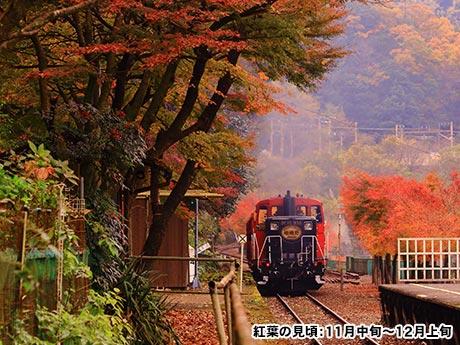 紅葉のトンネルを駆け抜ける「嵯峨野トロッコ列車」と「保津川下り」 日帰り