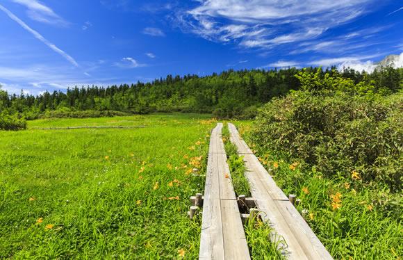 高山植物の宝庫「北アルプス」爽やか白馬と憧れの上高地への旅 3日間