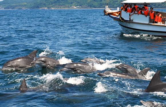 イルカに出会える確率98%!! 感動の天草イルカウオッチングと球磨川くだり 3日間