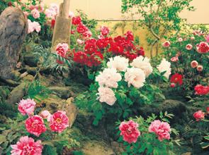 神の湯と称される玉造温泉に泊まる 出雲大社と美保神社でえびす・だいこく両参り 2日間