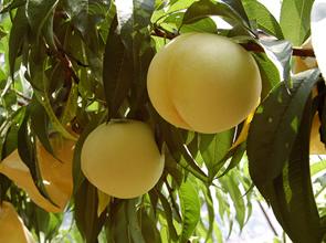 果物王国岡山でフルーツ狩りと令和から懐かしいあの頃へタイムスリップ!日帰り