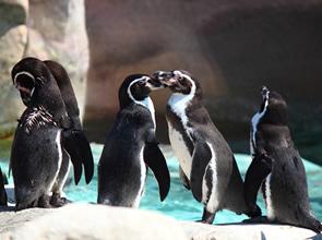 ペンギンに会える!海響館と秋吉台サファリランド・九州鉄道記念館 2日間