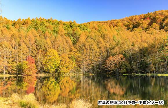 <おとなびメルマガ掲載コース>信州屈指の紅葉名所「横谷渓谷」と絵になる風景「御射鹿池」 3日間