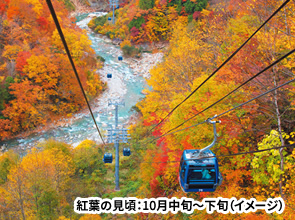 <おとなびメルマガ掲載コース>信越の紅葉を満喫 ダイナミックな紅葉散歩「ドラゴンドラ」と標高1,800メートルの絶景雲上露天風呂 3日間