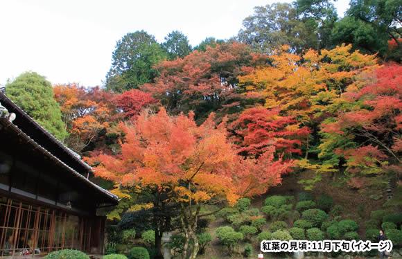 紅く染まる「令和ゆかりの地」太宰府と秋の麻生大浦荘 8日間だけの特別公開 2日間
