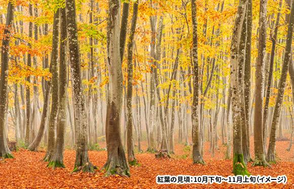 新潟が誇る絶景と新米・日本酒「こめどころ」満喫!魚沼・越後の旅 2日間
