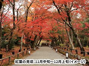 <おとなびメルマガ掲載コース>京都の紅葉を堪能 高雄・大原・鞍馬と秋の特別公開寺院 2日間