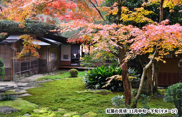 <おとなびメルマガ掲載コース>北近畿~九州エリアの紅葉