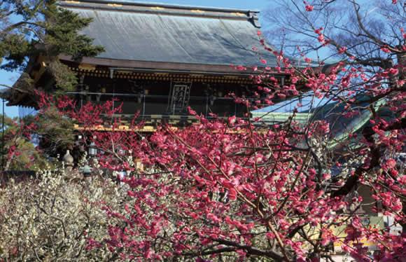 京の冬の旅特別公開 京に残る戦国の英傑ゆかりの寺院と春を告げる梅の名所 北野天満宮 2日間