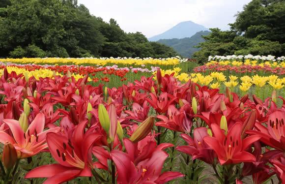 「とっとり花回廊」と山陰のあじさい寺 松江「月照寺」季節の花めぐりと山陰屈指の名湯玉造温泉 2日間