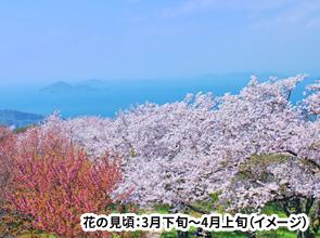 小型バスでしか行けない 四国随一の桜名所紫雲出山と日本のウユニ塩湖父母ヶ浜 春の絶景四国 2日間