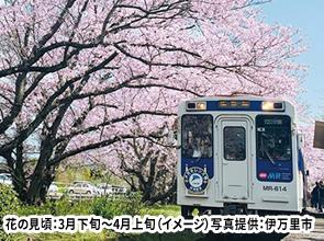 桜のトンネルを走る松浦鉄道と御船山楽園の幻想的な夜桜ライトアップ 2日間