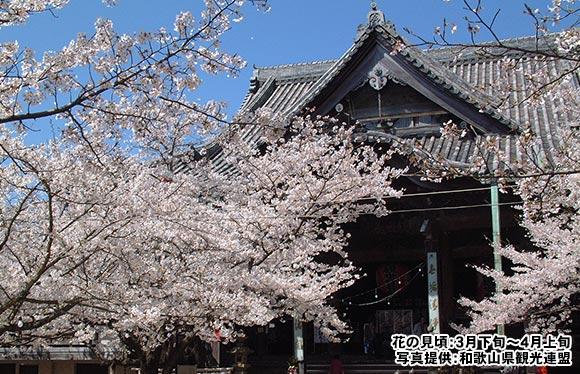 関西が誇る桜の名所 紀三井寺参拝 日帰り
