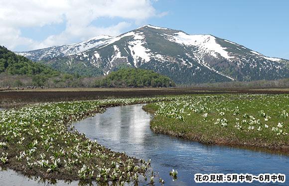 専門ガイドが同行 美しき高山植物の宝庫 尾瀬を歩く 3日間