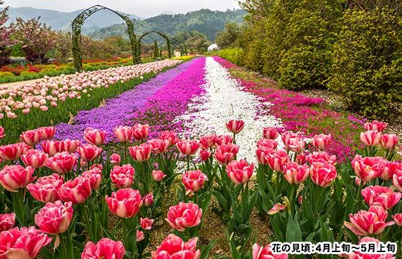 春風香る 絶景の天橋立と湯村温泉 2日間