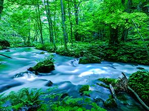 人気のローカル列車「リゾートしらかみ」に乗車!新緑の奥入瀬渓流と世界遺産白神山地 3日間