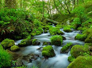 大山高原・木谷沢渓流・神庭の滝 清涼な里山 3日間