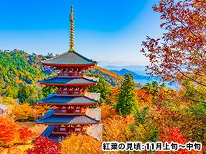 日本の原風景を留める古刹「成相寺」の紅葉と絵画のような紅葉「安国寺」ドウダンツツジ 特別公開 日帰り