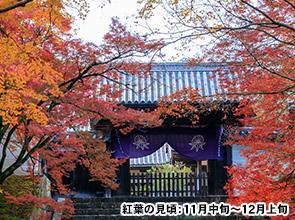 タクシーで巡る錦秋の京都と知る人ぞ知る燃えるような紅葉めぐり 日帰り